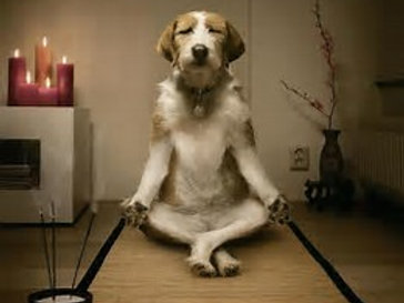 Emailed Reading - Animal Communication