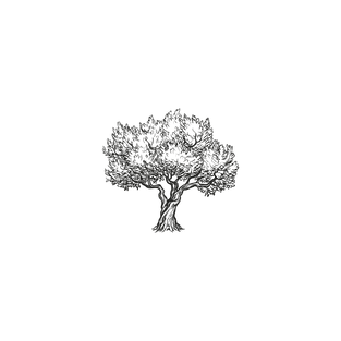 Olivenbaum, Casa Rosalba Valloria