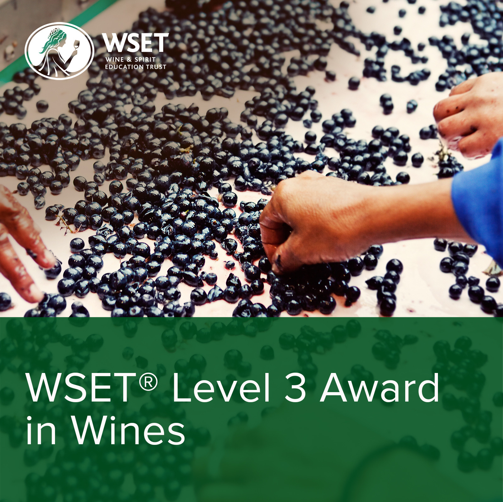 WSET L3 (May Intake PPND to Aug)