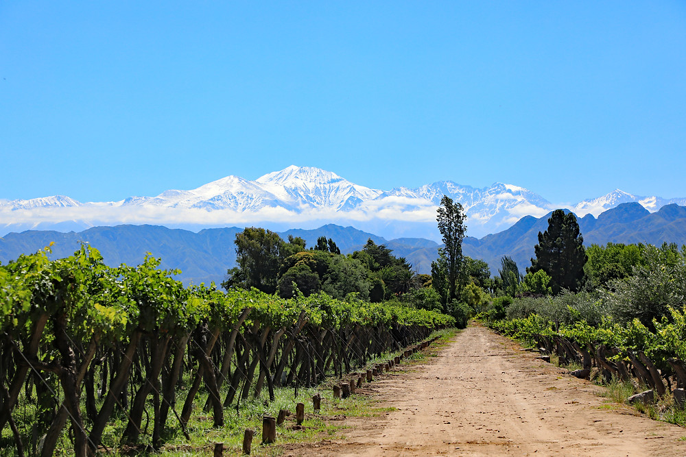 Malbec planted vineyards at the foot of the Andes Mountains in Mendoza, Argentina