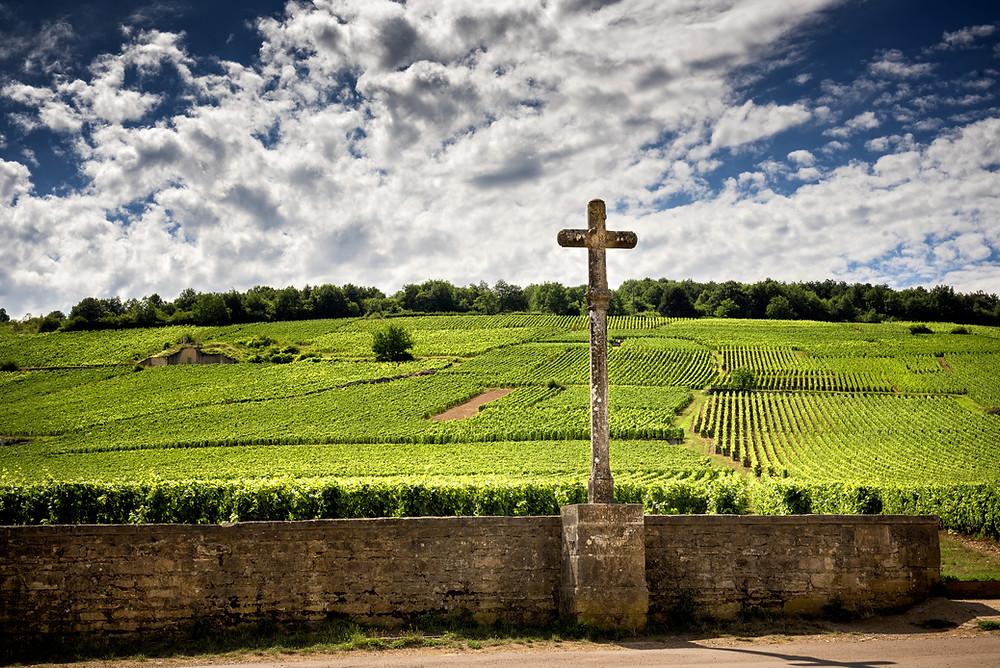 Vineyard near Vosne Romanée, Côte de Nuits, Bourgogne