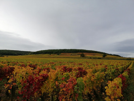 La Côte d'Or in Bourgogne