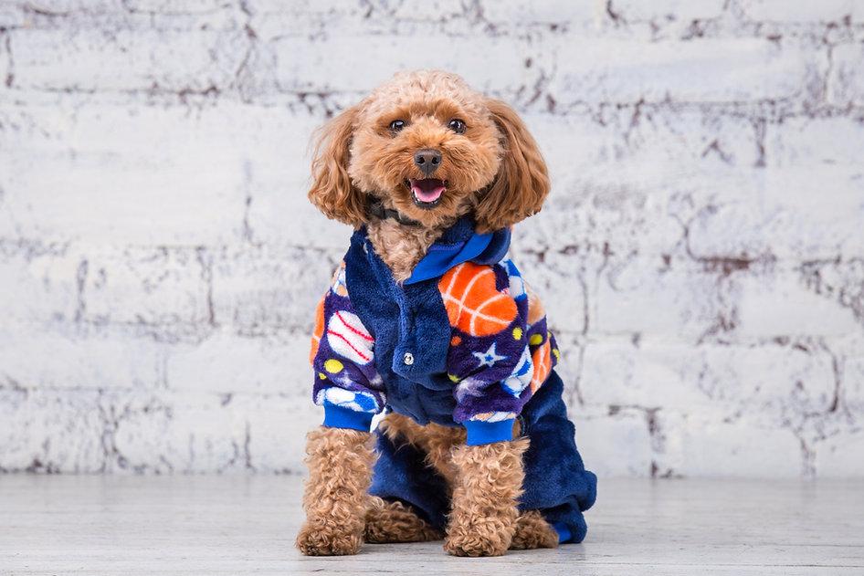 สอนตัดเสื้อผ้าสุนัข.jpg