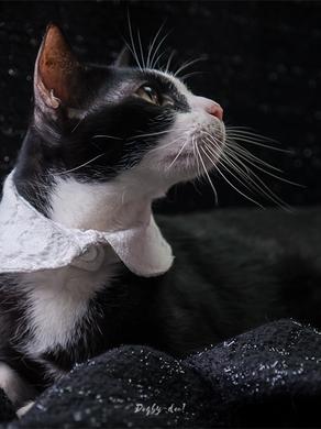 สอนเย็บปลอกคอบัว สำหรับน้องหมาน้องแมว (แจก Pattern ไซซ์นายแบบ)