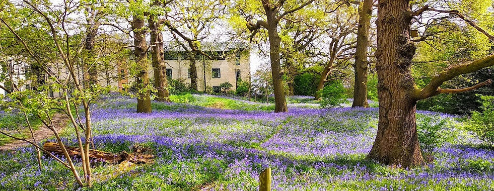 Bluebells at Kent University.jpg