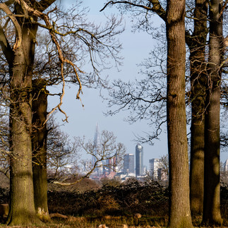 London through trees