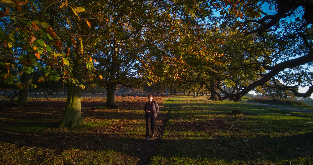 Richmond Park - heading down the hill towards Ham
