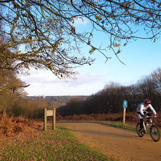 Autumn Cyclist - Richmond Park