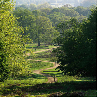 View to central London from Richmond Park