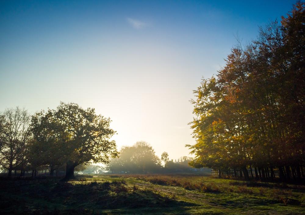 Richmond Park - as sun sets