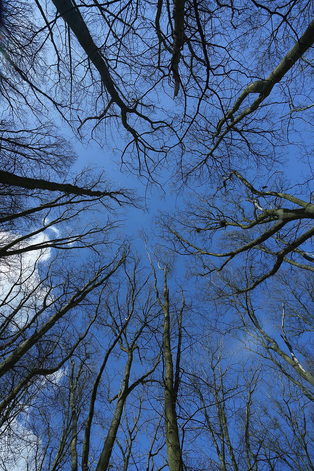 Crow's Nests at Tercentenary Plantation