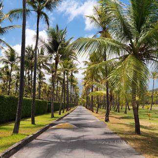 Plantation Road - Mustique