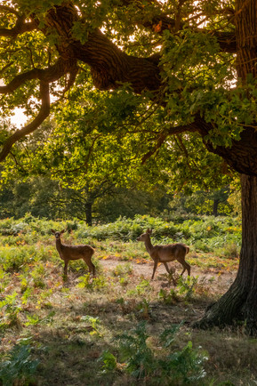 New image from Richmond Park