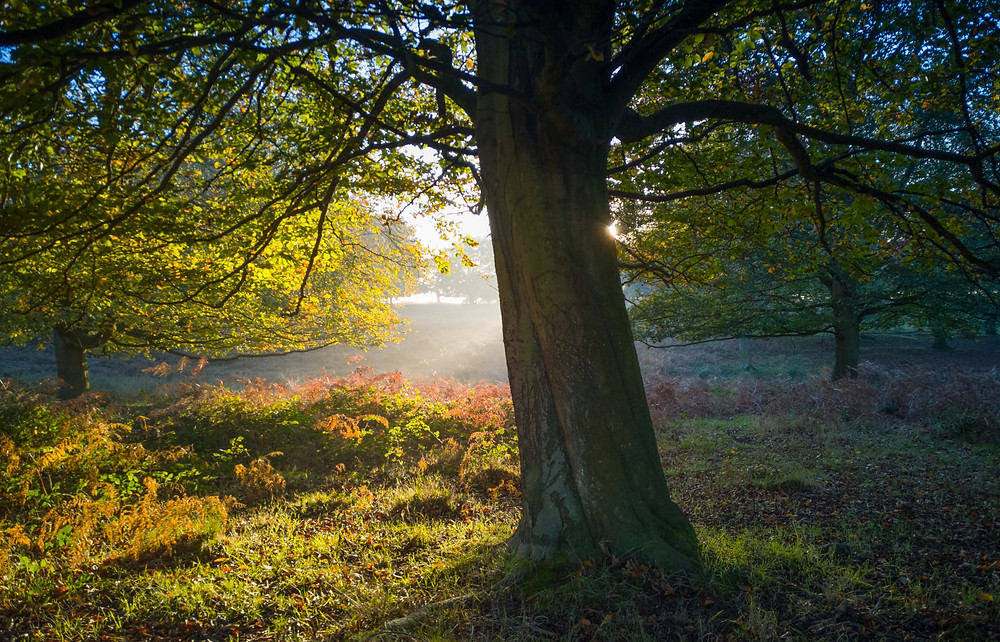 Richmond Park - The golden hour begins