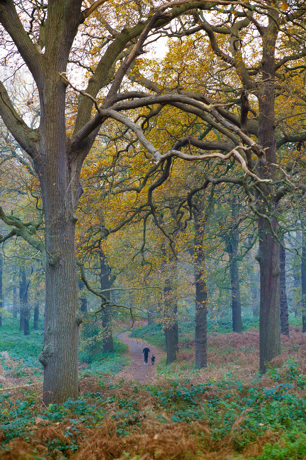 Jogger & Dog - Richmond Park