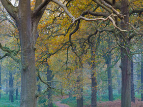Misty Jogger - Richmond Park
