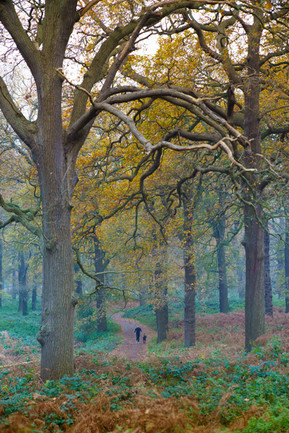 Misty Jogger - Richmond Park