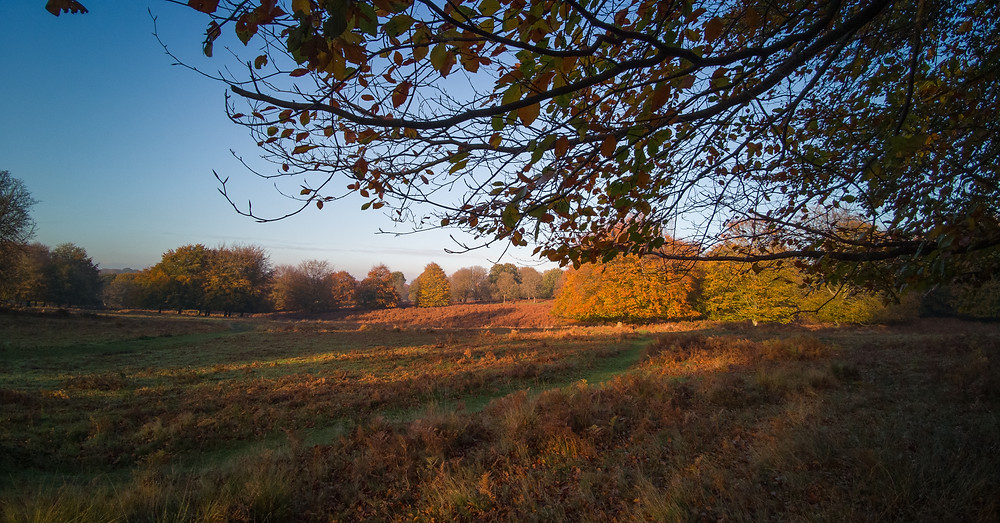 Richmond Park - The Gulley to Ham Gate - From Dann's Pond
