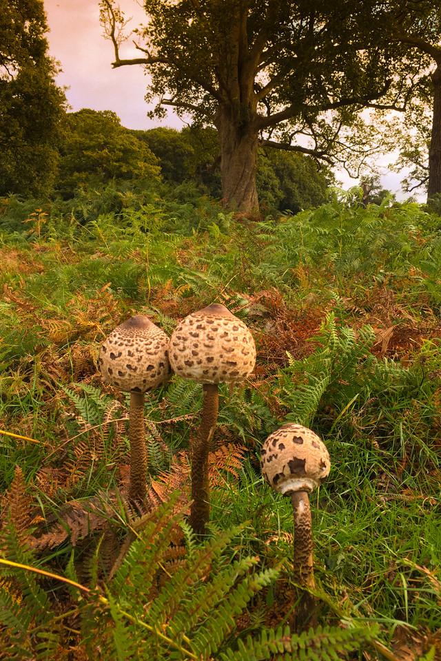 3 large mushrooms