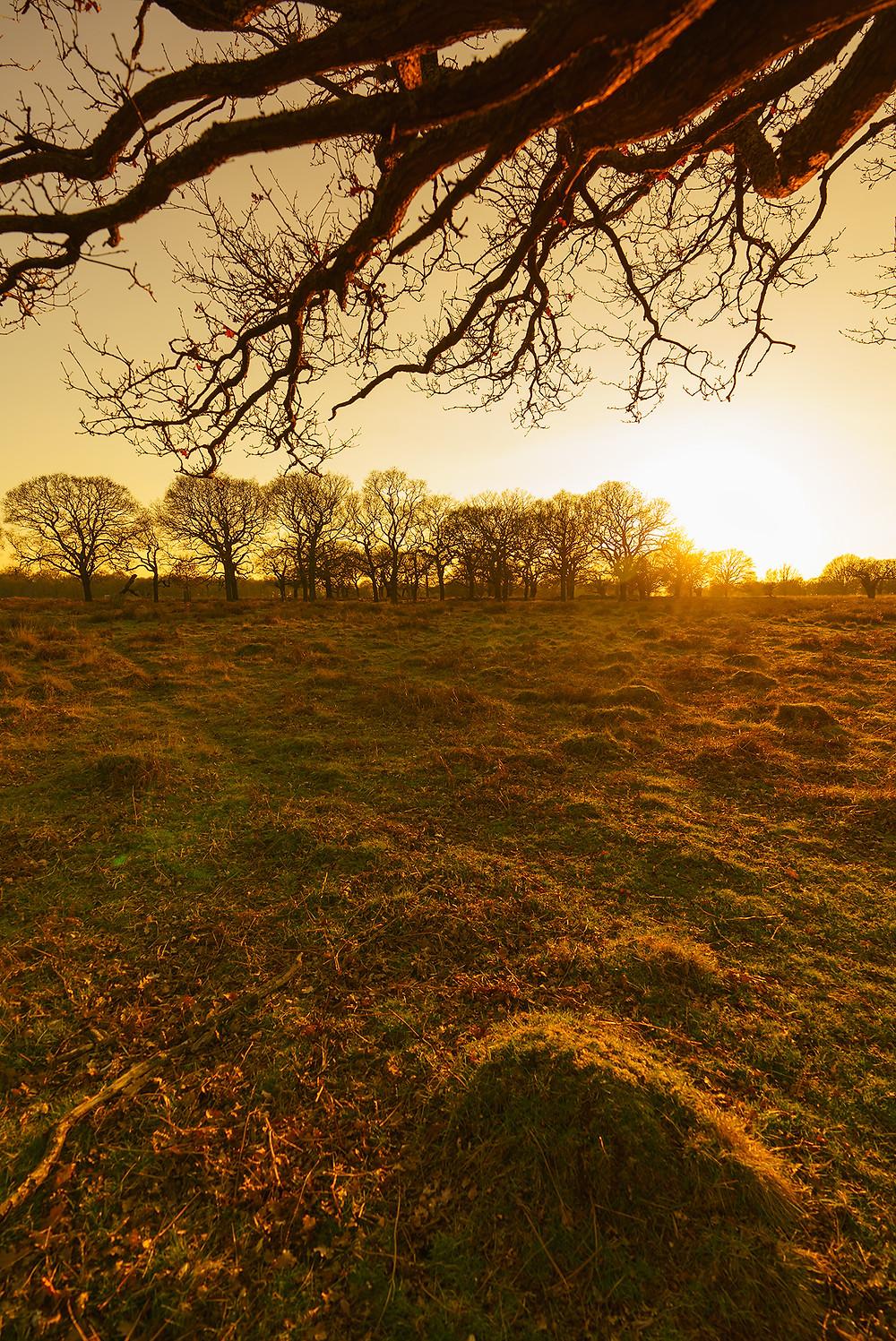 Yellow Meadow Ant Hills - Richmond Park London UK