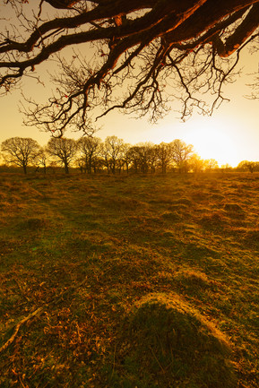 Ant Hill Sunset