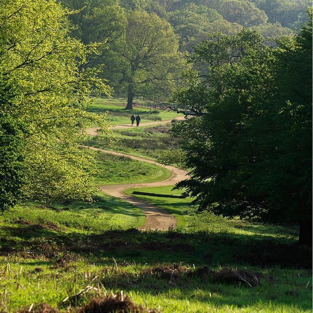 Hill at Richmond Park