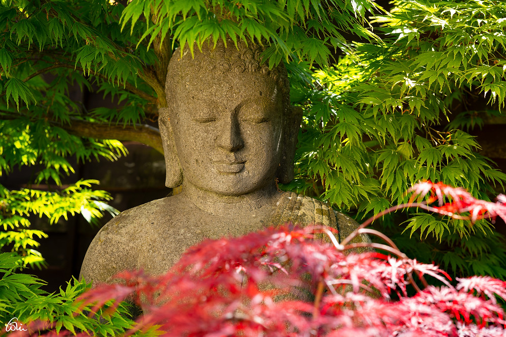Buddha in the garden - Copyright Colin Anthony