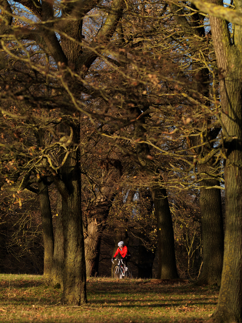 Cyclist summits Broomfield Hill, Richmond Park