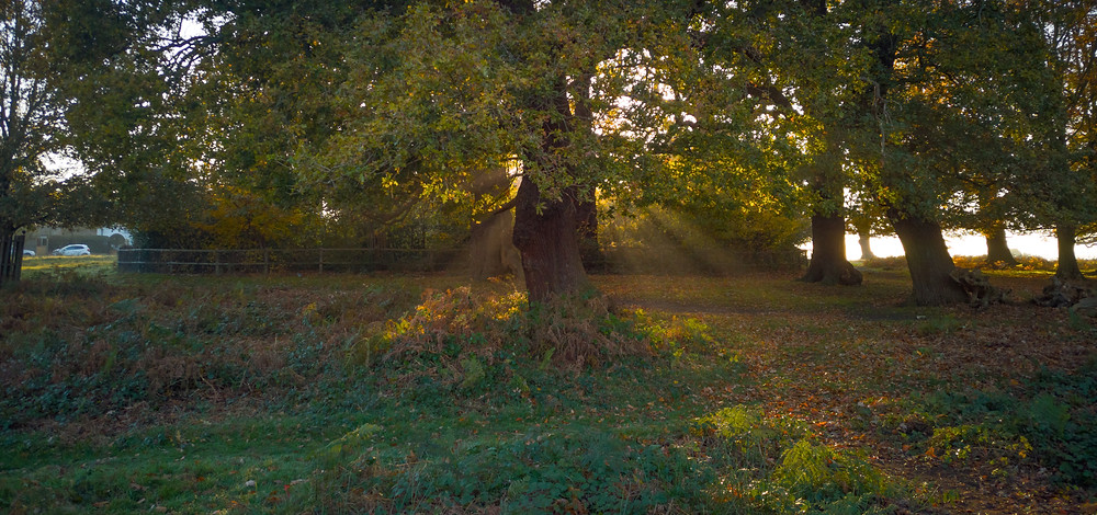 Richmond Park - Shafts of light by Thatched House Lodge