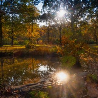 Isabella - Richmond Park