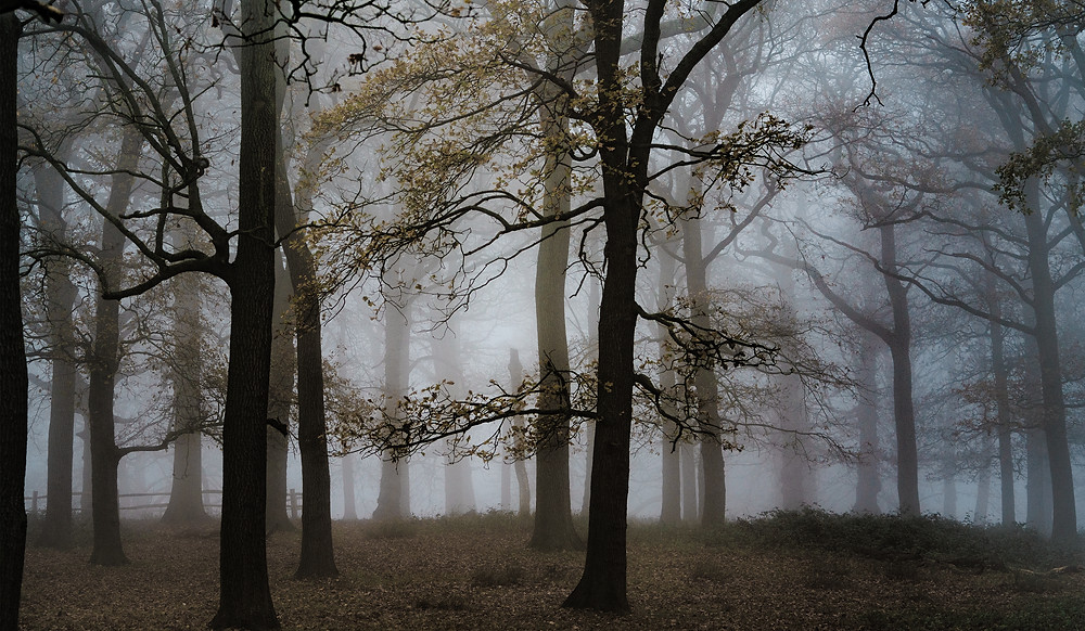 The woods at the top of Broomfield Hill - Richmond Park
