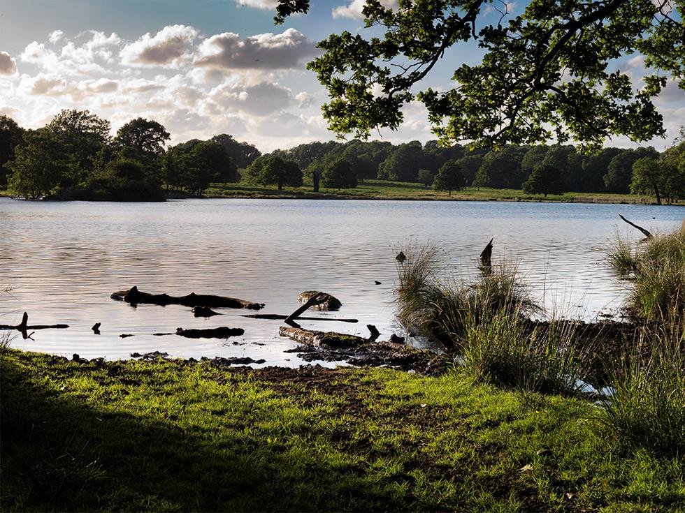 Pen Ponds, looking towards Richmond