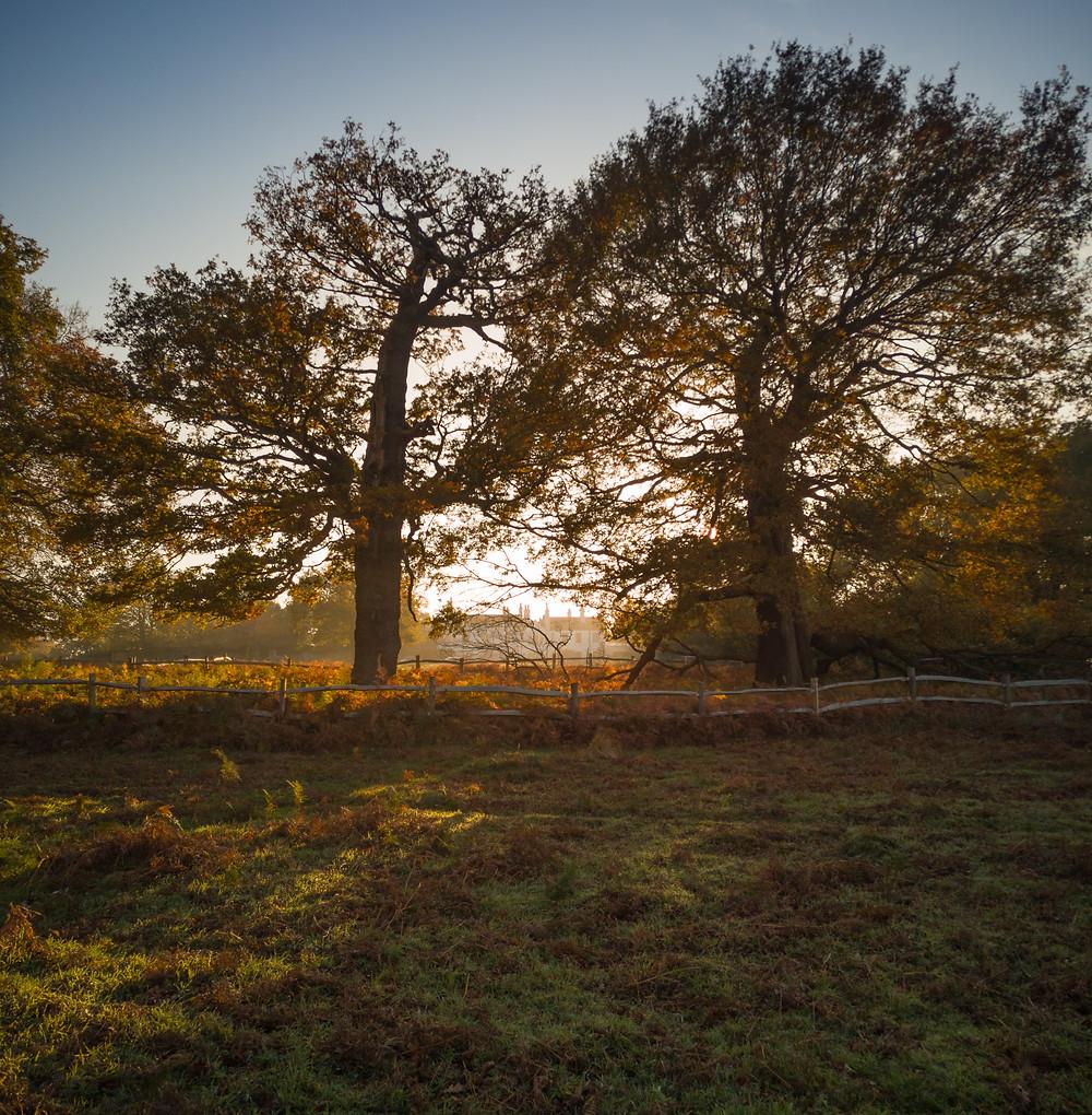 Richmond Park - towards Thatched House Lodge