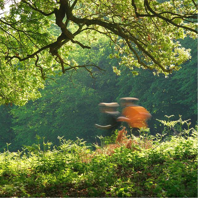 Joggers - Richmond Park