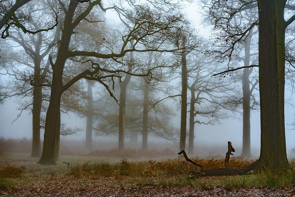 The woods by Pen Ponds - Richmond Park