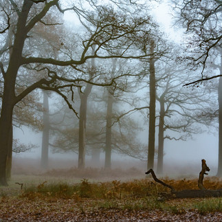 The woods at Broomfield Hill