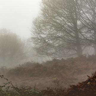 Broomfield Hill