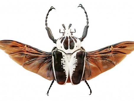 L'insecte : la génèse de notre marque