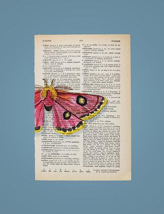 Roseate emperor moth