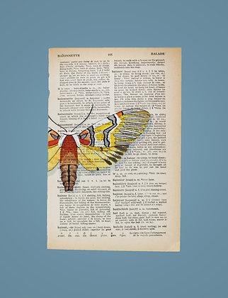 Arctiidae tiger moth
