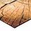 Thumbnail: Woodland