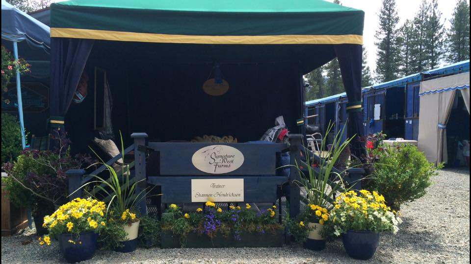 Horse show set up