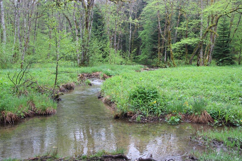 Ruisseau paisible du Jura...