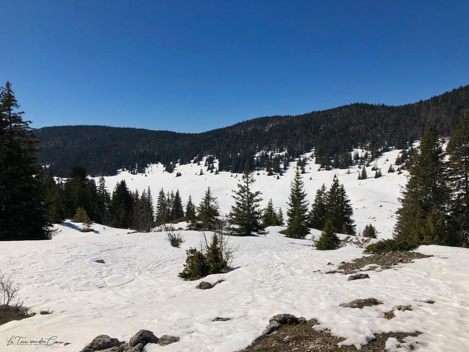 La combe de Darbounouse (1290 m)