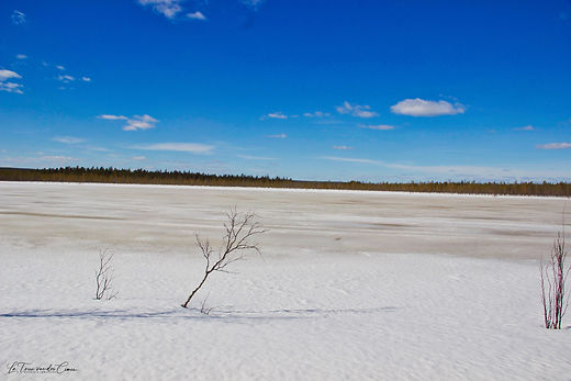Lac dans la taïga finlandaise