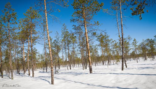 La taïga finlandaise
