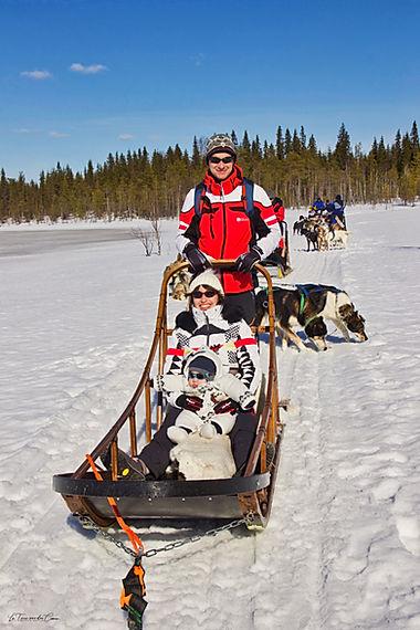 Chien de traineaux en Finlande