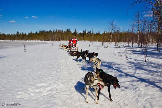 Mushing en Laponie