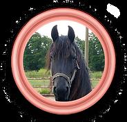 President Tebby het paard.png