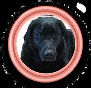 President Bo de hond.png